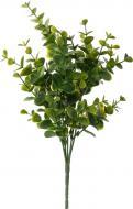 Рослина декоративна Евкаліпт HONGYE A5-03402