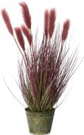 Рослина декоративна Очерет A0167 бордо