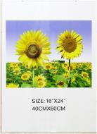 Антирама K316 1 фото 40x60 см прозрачный