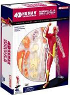 Об'ємна анатомічна модель 4D Master М'язи та скелет людини 26058