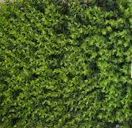 Искусственный коврик 8002 600х400 мм зеленый