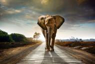 Картина на стекле Слон в дороге 120x80 см Styler