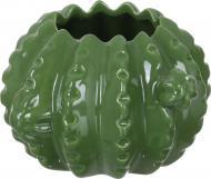 Ваза керамическая зеленая Кактус WW 2707-10 Eterna