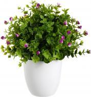 Рослина декоративна Потентілла XD15-427-L purple Boyds Collection