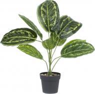 Рослина декоративна Аспідістра темно-зелена PFC(NL)-1053A