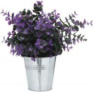 Рослина декоративна Каллізія пурпурна ZV(L)-003B