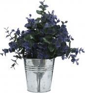 Рослина декоративна Каллізія синя ZV(L)-003C