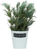 Рослина декоративна Лаванда біла HTP-003A