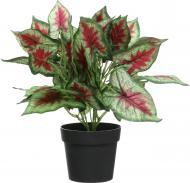 Рослина декоративна Сциндапсус PFC(NL)-746B