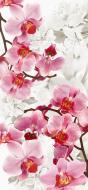 Фотошпалери  Орхідеї 207x96 см
