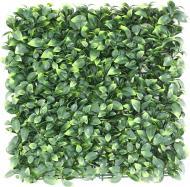 Декоративне зелене покриття Самшит молодий 50x50 см GCK-05