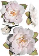 Декоративна наліпка Рози білі