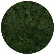 Мох стабілізований ягель неочищенний зелений 250 г