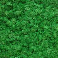 Мох стабілізований ягель неочищенний трав'яний світлий 150 г