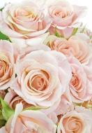 Фотошпалери  Рожеві троянди 207x144 см
