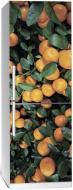 Наліпка на холодильник Zatarga Цитрус 01