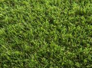 Ковролин TOSCANA 20 green 2 м