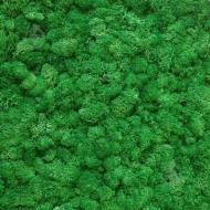 Мох стабілізований ягель очищений трав'яний світлий 100 г