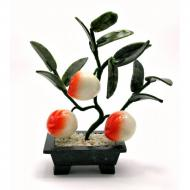 Дерево персик 3 плода Arjuna (44402)