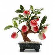 Дерево персик Arjuna 8 плодов (44404)