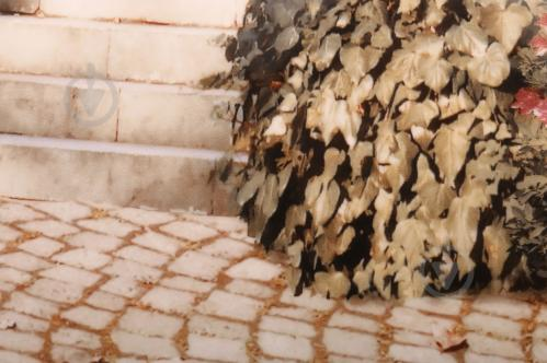 Плитка Golden Tile Troyanda Sorrento декор №6 60Б361 25x33 - фото 2