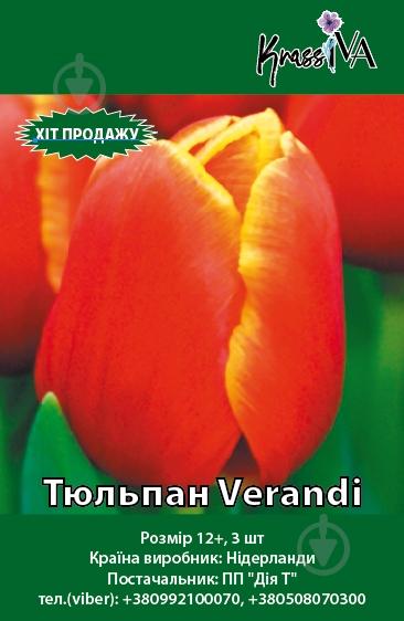 Цибулина Тюльпан Verandi 3 шт.