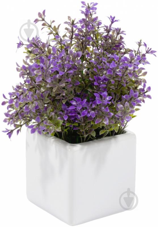Цветы» проверочное слово | 799x557