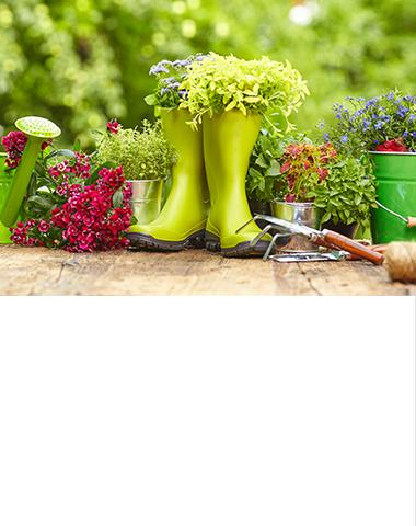 〜 Догляд за рослинами та захист від шкідливих факторів – Стаття від  інтернет-магазину Епіцентр 6ca1d2c2a3c08