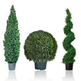 Растения уличные