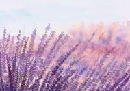 Картина на холсте Лаванда 100x70 смLaPrint Натуральный холст (200164)