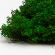 Мох стабілізований Green Ecco Moss Ягель Український 500 г Зелений