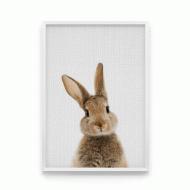 Постер в рамке Кролик спереди 30x40 см