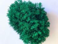 Мох стабілізований Green Ecco Moss Ягель Український 500 г Ізумрудний