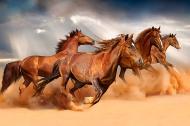 Картина на холсте Лошади 90x60 смLaPrint Натуральный холст (200159)