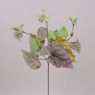 Листья Бегонии Flora Бордово-зеленый (71167)