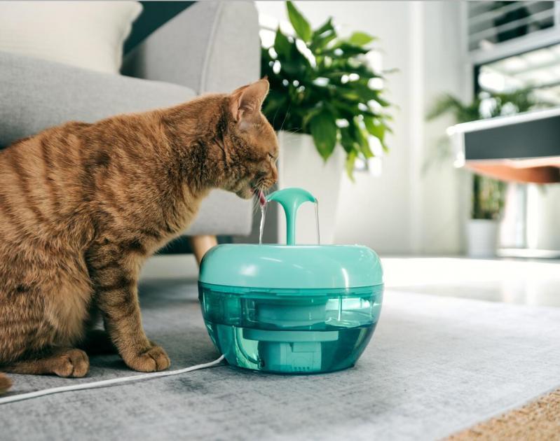 Автоматична поїлка-фонтан для кішок Pawoof X1 Зелений - фото 4